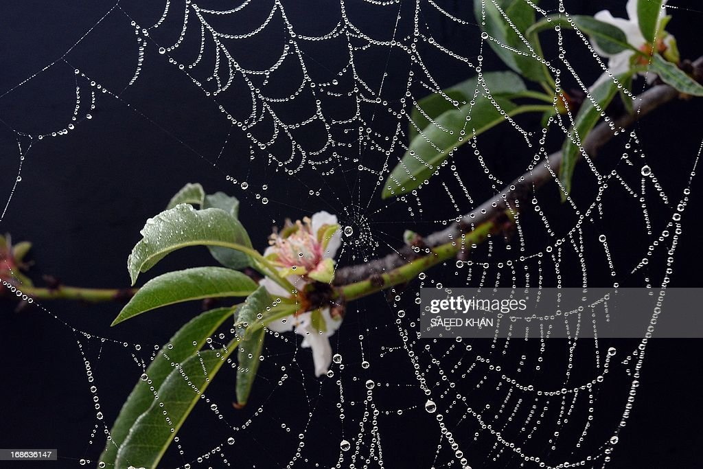 In this picture taken on May 12, 2013 water drops hang on a spider's web in Sydney. AFP PHOTO / Saeed Khan