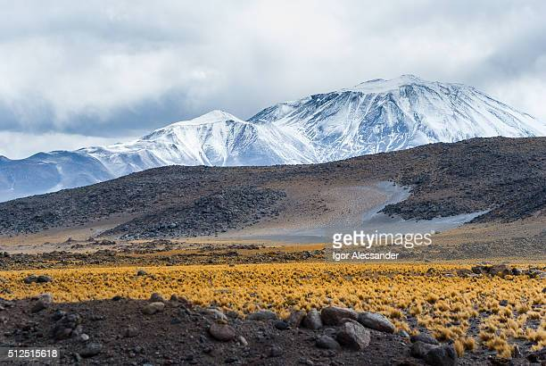 Incahuasi Volcano and Andes feathergrass or Jarava ichu in San Francisco Pass, Fiambala, Catamarca Province, Argentina
