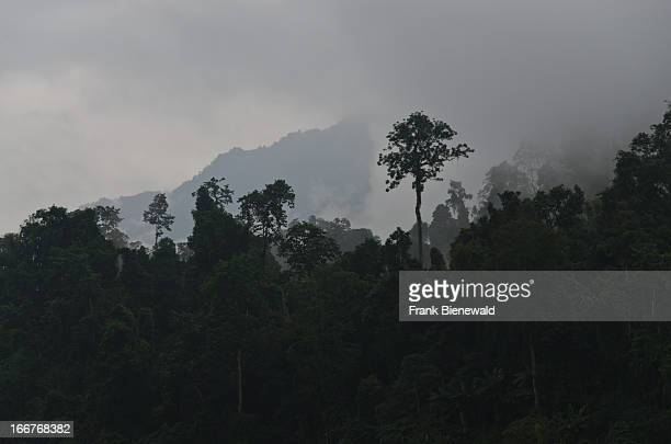 Incredible vegetation is found in the jungle near the confluence of the rivers Siang and Yamgo