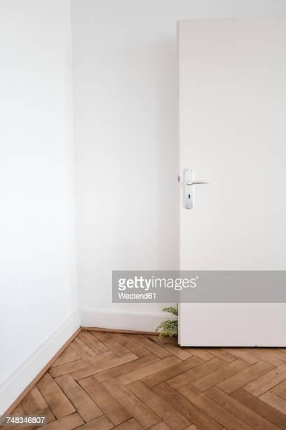 Inddor plant behind door on wooden floor