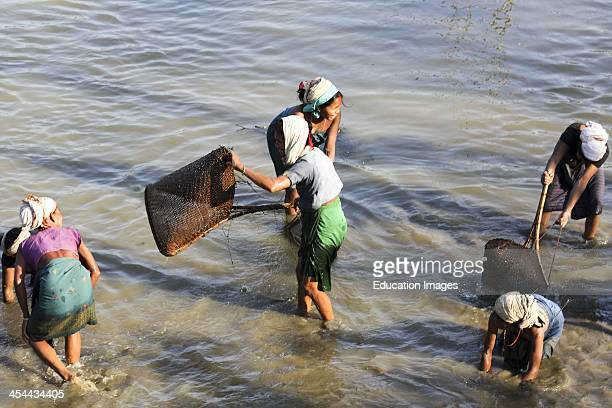 India Assam State Kaziranga National Park Women Fishing In River Using Hands And Straw Baskets Fish Stored Inside Their Clothing