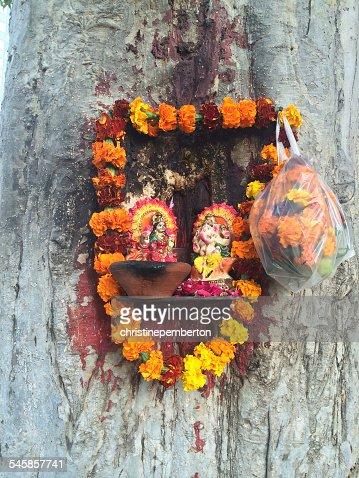 India, Delhi, Little Hindu shrine nailed to tree trunk