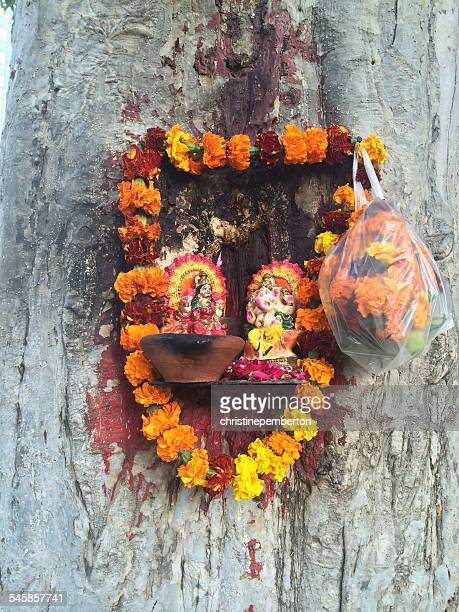 India, Delhi, Little Hindu shrine nailed to tree trunk