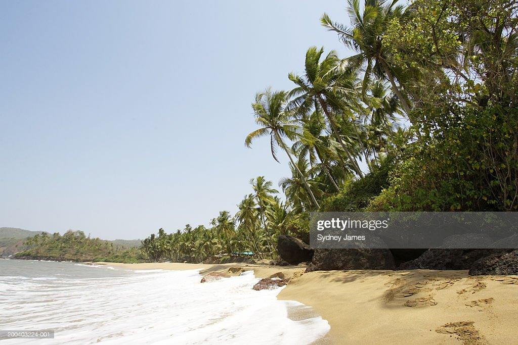 India, Goa, Kola Beach : Stock Photo
