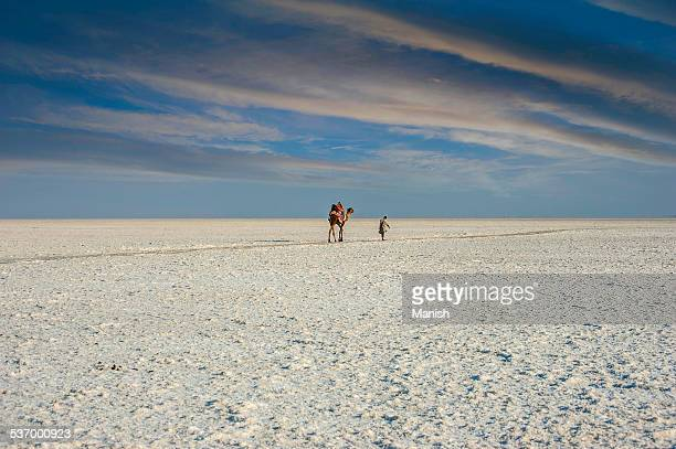 India, Gujarat, Camel and man are walking in white desert of Kutch