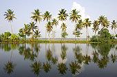 India, Kerala, Alappuzha, palm trees (Palma sp.) on backwaters