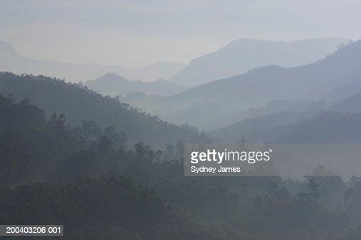 India, Kerala, Western Ghats Mts., tea plantations, dusk