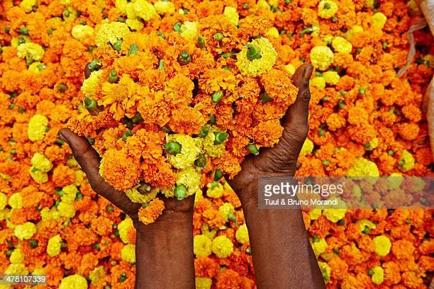 India, Kolkata, Mullik Ghat flower market