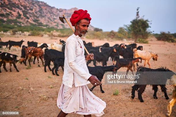 India, Rajasthan, Rabari village