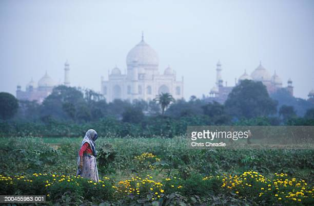 India, Uttar Pradesh, Agra, Taj Mahal, farmer in foreground