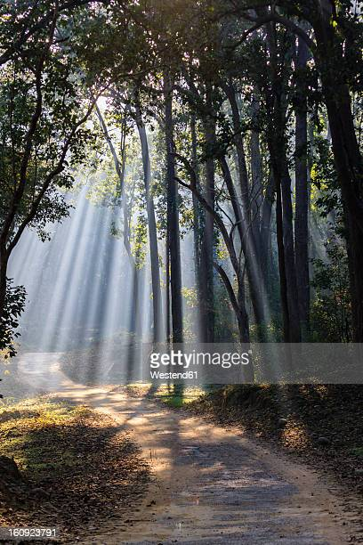 India, Uttarakhand, View of forest with shala trees at Jim Corbett National Park