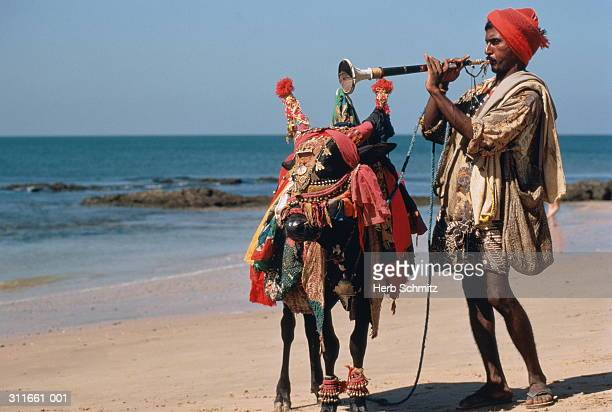 India,Goa,Ajuna beach,musician with decorated cow,playing horn on beac