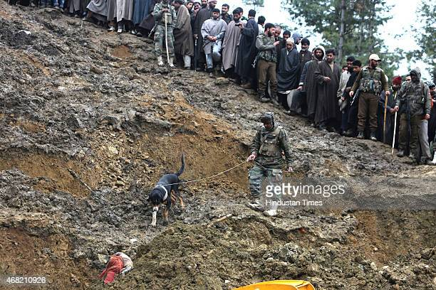 Indian Army sniffer dog looks for a missing boy in the village of Laden at Chadoora on March 31 2015 some 40kms west of Srinagar India Emergency...