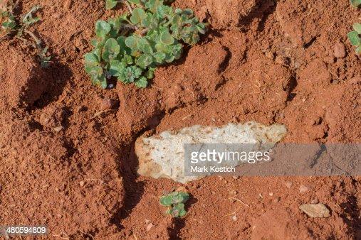Indian Arrowhead Artifact in Dirt : Stock Photo