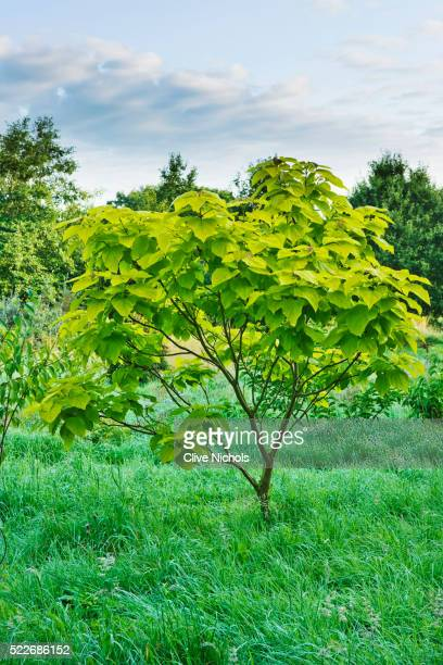poplar branch hindu single men The name india is derived from indus, which originates from the old persian word hindu the latter term stems from the sanskrit word sindhu, which was the historical local appellation for.
