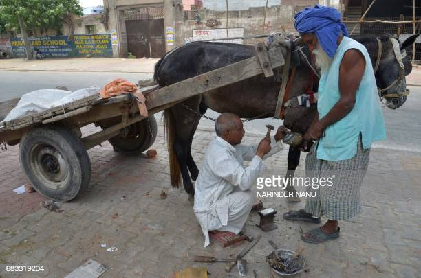 Indian blacksmith Raj Kumar fits a horseshoe onto a horse's hoof on a roadside in Amritsar on May 15 2017 Horsedrawn vehicles are a common sight on...