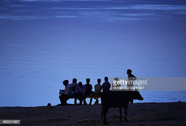 Indian boys and men sit on a small wooden stand near a cow by the banks of the Ganges river at daybreak in Varanasi in May 18 2014 The Ganges river...