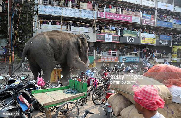 TOPSHOT Indian bystanders watch as a wild elephant with a tranquillizer dart in its back side walks along a street in Siliguri on February 10 2016...