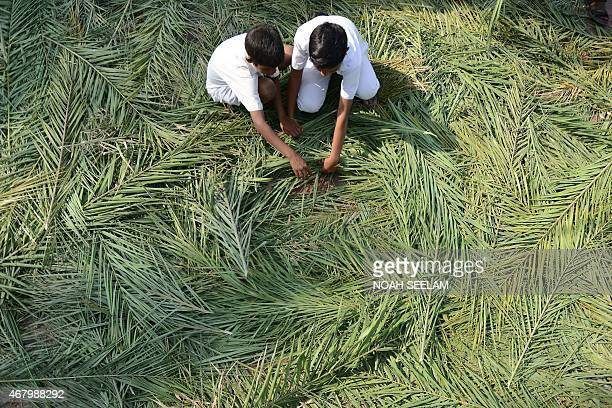 Indian Christian devotees collect palm fronds for a Palm Sunday service at Wesley Church in Secunderabad the twin city of Hyderabad on March 29 2015...