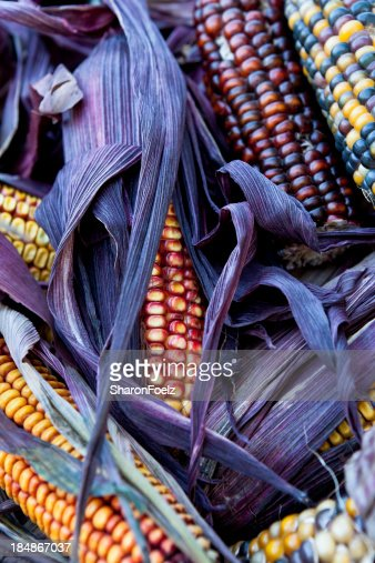 hindu singles in corn Indian or flint corn is one of many types of maize or corn with colored kernels,  either of a single or multiple colors to learn more about these.