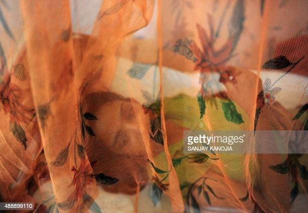Indian dengue patient Ritika Srivastava lays on a bed covered with a mosquito net in the dengue ward of a government hospital in Allahabad on...
