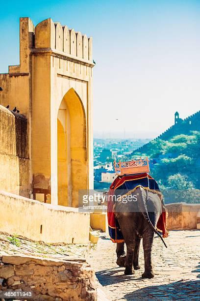 Indian Elephant Amber Fort Jaipur