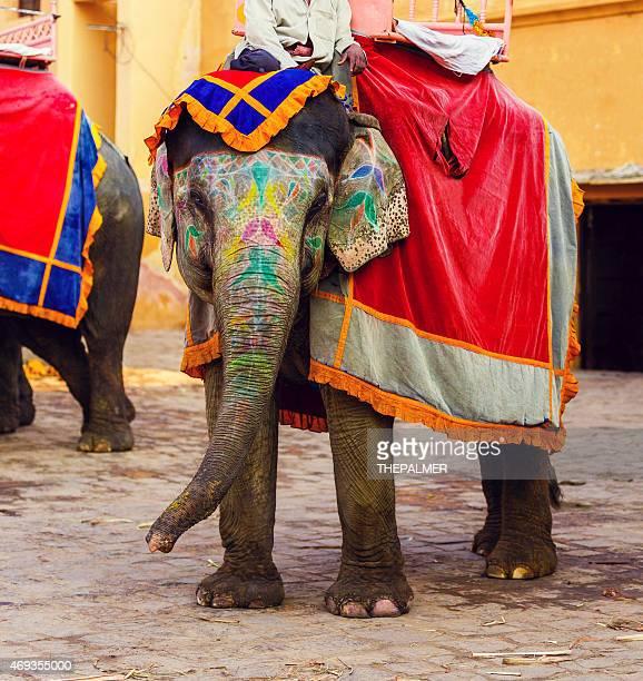 インドのジャイプールの象