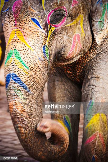 Indian Elephant painted