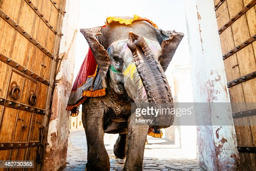 Indian Elephant Running Archway Amber Palace