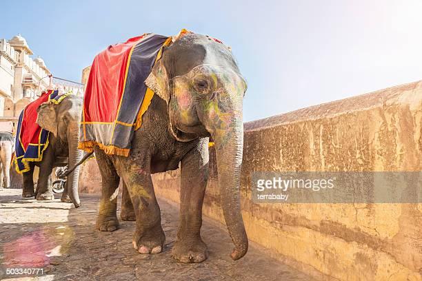 インドにインド象のアンベール城