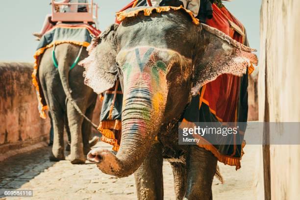Indian Elephants Convoy Amber Palace Jaipur India