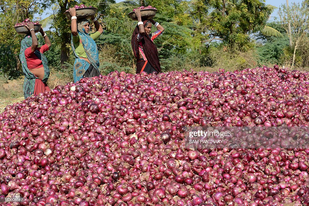 Indian farm hands stack farm fresh onions in a field as Indian villagers and environmentalists hold a protest meeting against The National Green Tribunal's decision to re-evalute the Nirma Cement Plant project at Mahuva town, some 300 kms from Ahmedabad on March 3, 2013. Mahuva of Gujarat state is a main hub of the onion crop, has Gujarat's largest onion yard and dozens of onion dehydration plants in the vicinity of the proposed Nirma Cement Plant project. AFP PHOTO / Sam PANTHAKY