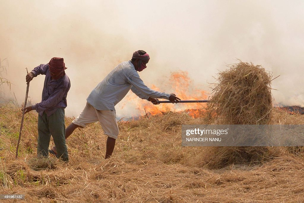 Indian farm labourers burn rice straw after harvesting the paddy crops in the fields on the outskirts of Amritsar on October 9 2015 The National...