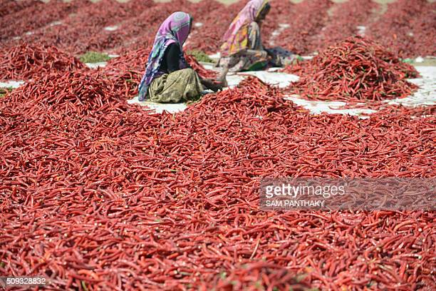 TOPSHOT Indian farm labourers dry newlyarrived chillies at a farm in Sertha some 25 km from Ahmedabad on February 9 2016 AFP PHOTO / Sam PANTHAKY /...