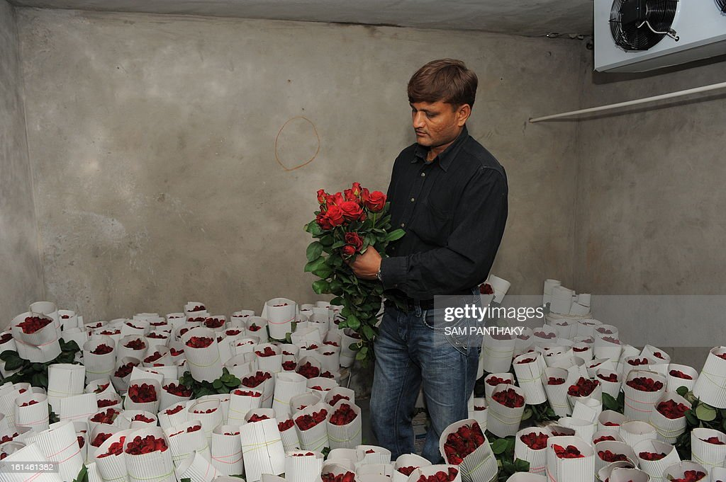 Indian farmer Hiteshbhai Patel, 35, checks Dutch roses at his greenhouse in the village of Badarkha, some 30 kms from Ahmedabad on February 11, 2013. On the Valentine's Day which falls on February 14, the demand for roses and flowers increases as they are given as gifts. Hiteshbhai has included a cold storage facility also in the village to preserve Dutch roses to meet any last minute demand. AFP PHOTO / Sam PANTHAKY