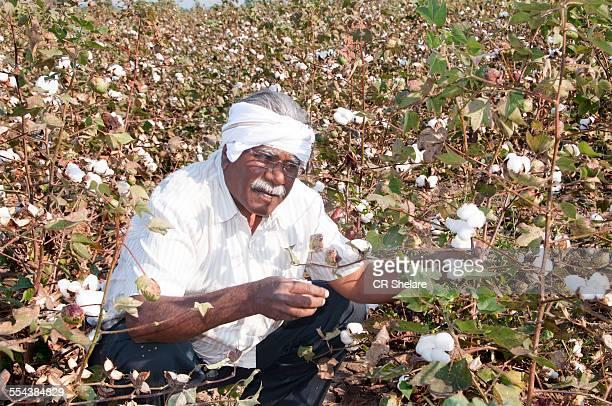 Indian Farmer In Cotton field