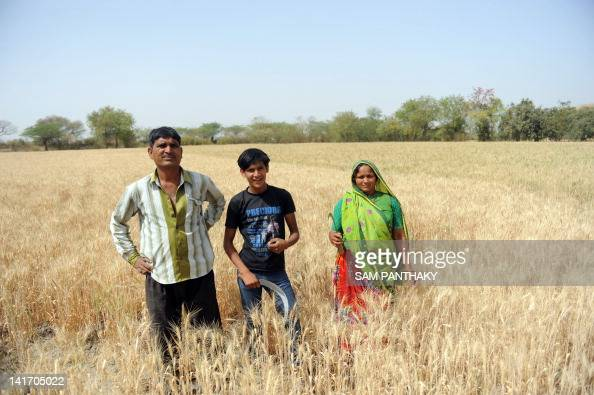 Indian farmers Babubhai Patel 50 years with his 19 year old son Mahendra and his 45 year old wife Labhuben stand in their field of wheat in the...