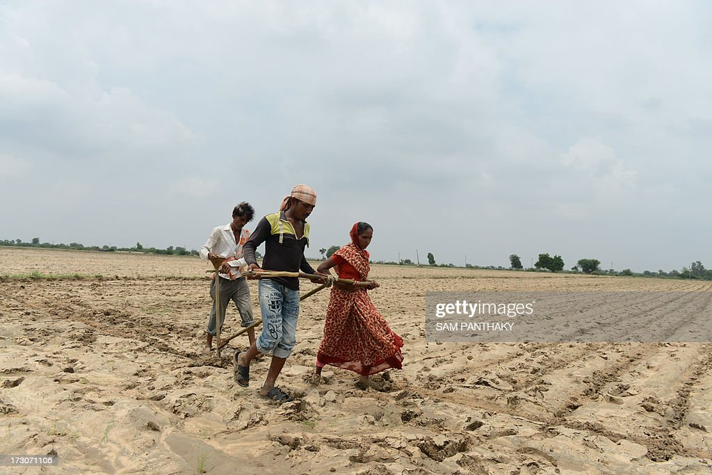 Indian farmers, Bharat Savji (C), Gitaben Mansukhbhai (R) and Mansukhbhai Kodabhai (L) plough a field without the assistance of machinery or livestock in Wadla village of Lakhtar Taluka, some 90 kms from Ahmedabad, on July 6, 2013. Some farmers have resorted to manually ploughing their fields as rising costs of livestock and maintenance eat into their earnings. Over 70 percent of Indians depend on farm incomes and about 65 percent of India's farms depend on rains that fall between June and September. AFP PHOTO / Sam PANTHAKY