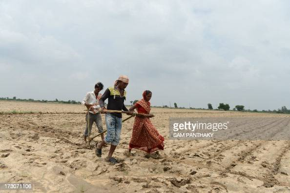 Indian farmers Bharat Savji Gitaben Mansukhbhai and Mansukhbhai Kodabhai plough a field without the assistance of machinery or livestock in Wadla...