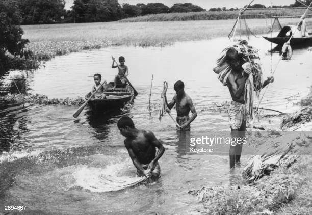 Indian Farmers bring jute plants from a flooded field after they have been soaked for several weeks The plant is grown for its fibres which are used...