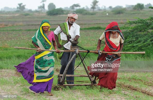 Indian farmers Hansaben Geetaben and Jesingbhai plough a field in preparation for sowing cotton seeds in Nani Kisol village around 70 km from...