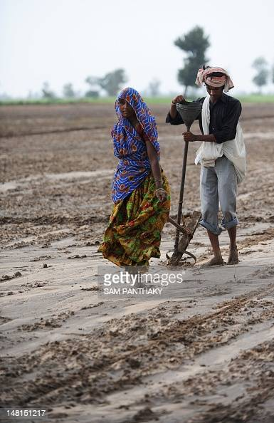 Indian farmers plough a field in preparation for sowing cotton seeds in Nani Kisol village around 70 km from Ahmedabad on July 11 2012 Agriculture...