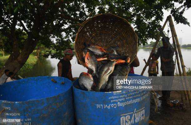 Indian fishermen sort out their freshly caught fish to send to the local whole sale market in Kolkata on May 18 2017 The state government is...