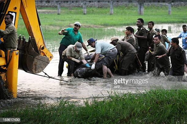 Indian Forest Department officials use a mechanical digger to drag a tranquilized female one horned Rhinoceros onto dry land in the village of...