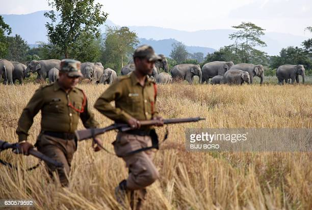 Indian forest guards look on as a herd of elephants gathers in a paddy field in the village of Bahampur in Nagaon district some 155kms east of...