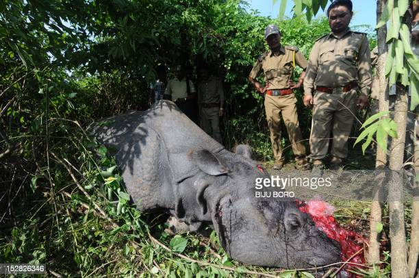 Indian forest officials stand near a one horned horn Rhinoceros which was killed and dehorned by the poachers at Karbi hills near Kaziranga National...