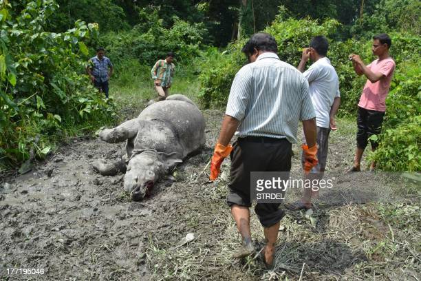 Indian forest officials stand near the body of a one horned horn Rhinoceros which was killed and dehorned by poachers at Burapahar in Kaziranga...