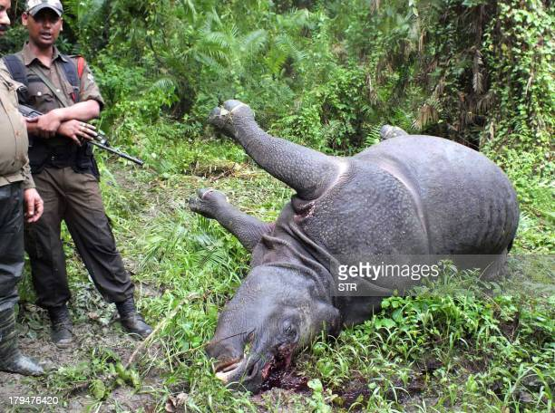 Indian forest officials stand near the body of a OneHorned Rhinoceros which was killed and dehorned by poachers near Tunakuti forest camp under...