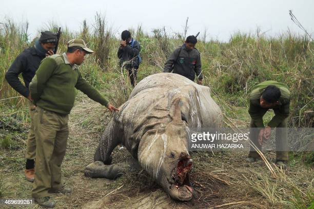 Indian forestry officials stand near the carcass of a onehorned rhinoceros which was killed and dehorned by poachers in the Kahora range of Kaziranga...
