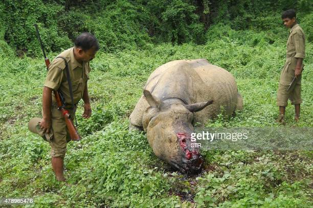 Indian forestry officials stand near the carcass of a onehorned rhinoceros which was killed and dehorned by poachers in Burapahar a range of the...